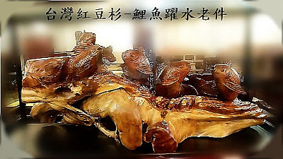 台灣紅豆杉鯉魚
